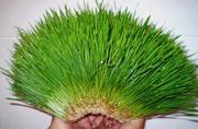 Оборудование для получения зелёных кормов для животных