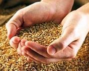 Купить Пшеницу,  Ячмень,  Отруби мы продаем!
