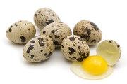 Яйца перепелов - диетическое и инкубационное