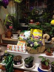 Продам готовый цветочный бизнес в сзр